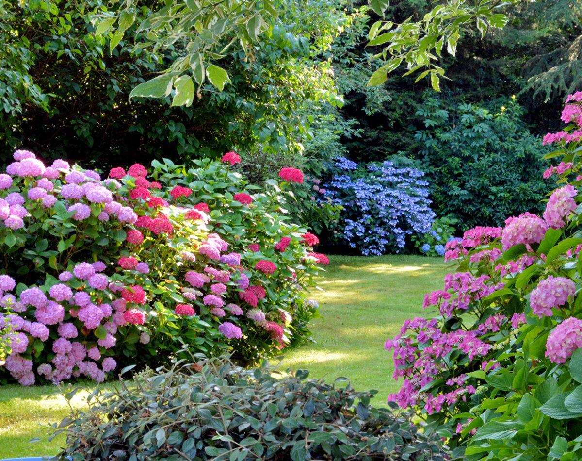 Beautiful garden and landscaping