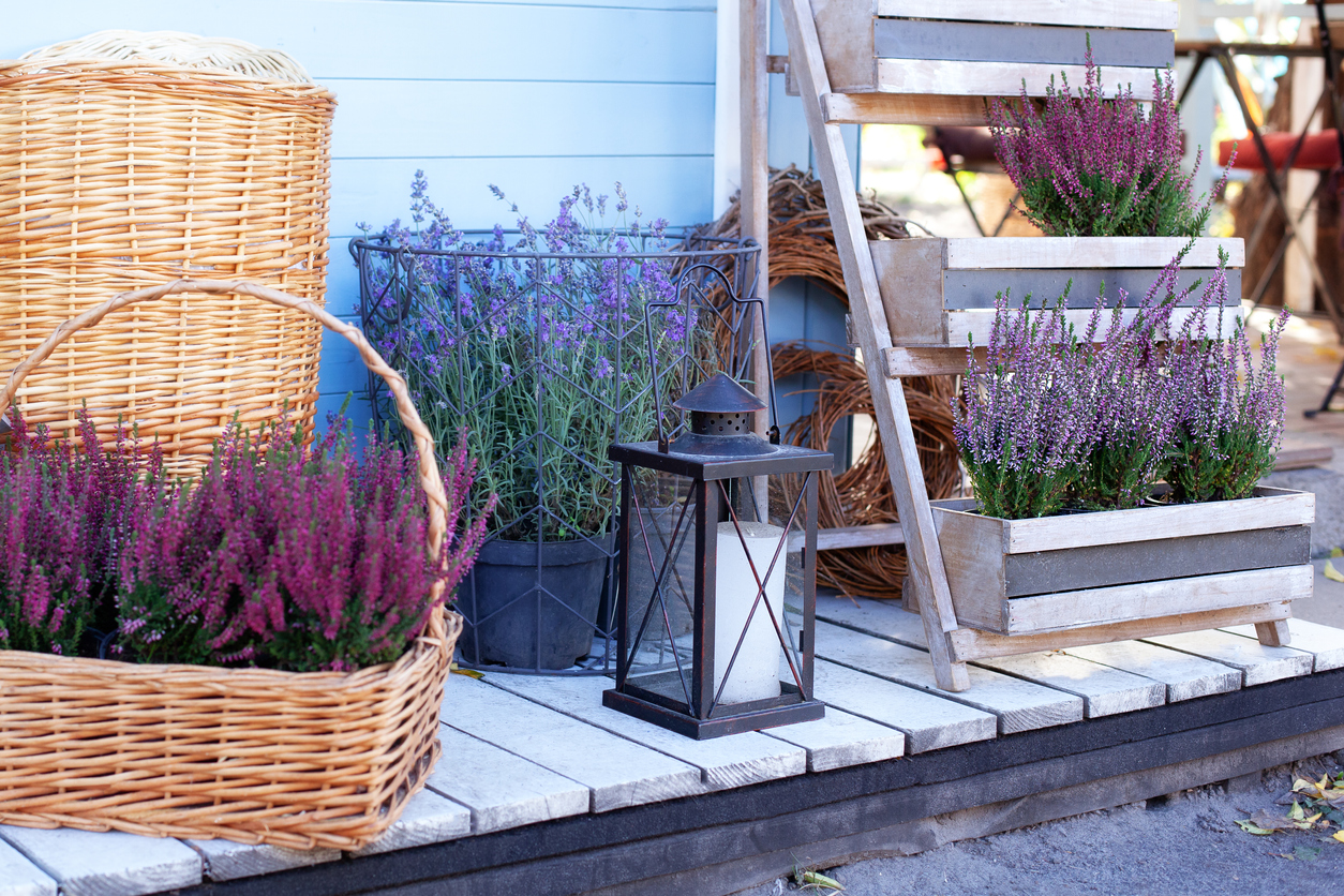 lavender flower garden pots